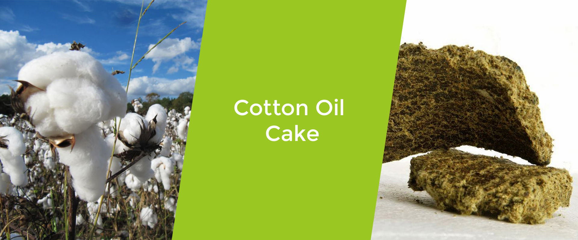 cotton-oil-cake-welcome-broker